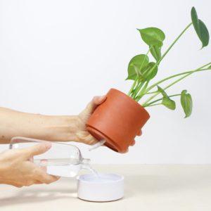 Jeannot le pot à réserve d'eau – Ciel mon Radis !