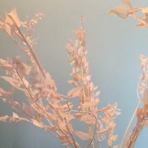 Fleurs séchées – Ruscus rose
