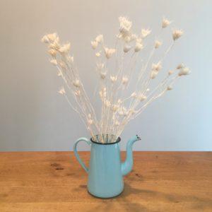 Fleurs séchées – Nigelle blanche